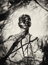 Andrei Cosma SHADOW OF MAN IN TREE BRANCHES Men