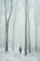 Andrei Cosma ONE PERSON WALKING IN SNOWY FOREST Trees/Forest