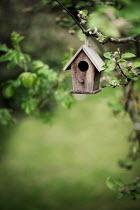 Jaime Brandel Birdhouse hanging from branch
