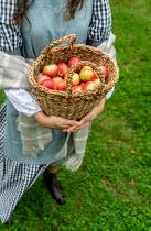 Stephen Mulcahey a woman holding a fruit basket
