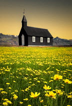 Evelina Kremsdorf SMALL CHURCH IN FIELD OF YELLOW FLOWERS Religious Buildings