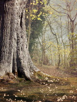Victoria Davies Tree trunk in forest