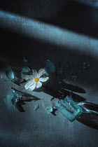 Magdalena Wasiczek white flower and smashed glass Flowers