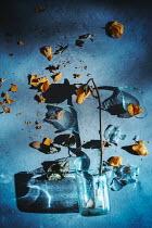 Magdalena Wasiczek yellow rose and broken glass Flowers