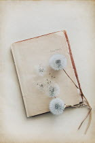 Magdalena Wasiczek DANDELION SEEDS LYING ON HISTORICAL DIARY Flowers