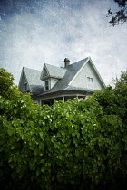 Alison Archinuk TILED WOODEN HOUSE WITH HEDGE Houses