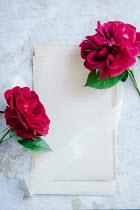 Isabelle Lafrance TWO RED ROSES ON BLANK PAPER Flowers