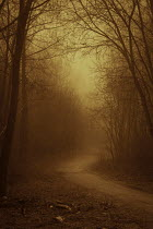 Valentino Sani EMPTY FOGGY ROAD IN WINTRY COUNTRYSIDE Paths/Tracks