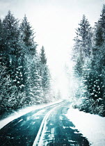 Sandra Cunningham COUNTRY ROAD WITH TREES IN SNOW Paths/Tracks
