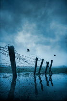 Silas Manhood BARBED WIRE AND WIRE FENCE IN FLOODED COUNTRYSIDE Gates