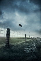 Silas Manhood WIRE FENCE AND POSTS IN STORMY COUNTRYSIDE Gates