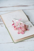 Magdalena Wasiczek PINK FLOWERS LYING ON DIARY WITH PEN Flowers