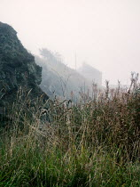 David Baker Grass and rock formation in fog