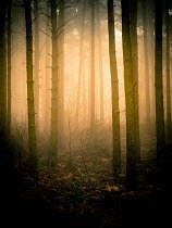 Trevor Payne EMPTY FOGGY FOREST Trees/Forest