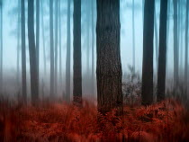 Trevor Payne FOGGY FOREST WITH FERNS IN AUTUMN Trees/Forest