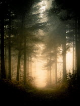 Trevor Payne COUNTRY PATH WITH MISTY FOREST Paths/Tracks