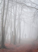 Trevor Payne MAN ON PATH IN FOGGY WINTRY FOREST Men