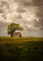 Lyn Randle OLD STONE BUILDING BY TREE IN COUNTRYSIDE