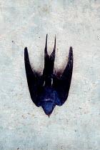 Liz Dalziel DEAD BIRD FROM ABOVE