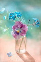 Magdalena Wasiczek PANSY AND FORGET-ME-NOTS IN BOTTLE