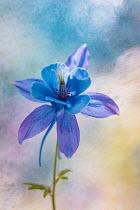 Magdalena Wasiczek CLOSE UP OF BLUE FLOWER