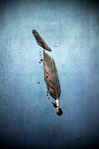 Miguel Sobreira CUT FEATHER WITH BLOOD